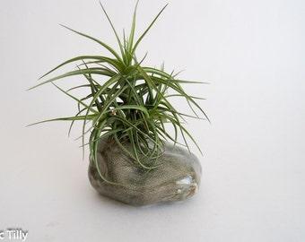 Ceramic rock planter, Tillandsia Air plant terrarium, indoor plant, garden, home decor,  gift