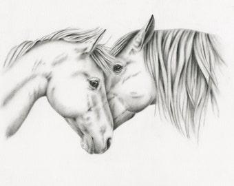 "Original Charcoal Drawing, White Horses Sketch, Horse Art, - ""Equine Embrace"" - 8""x10"", Horses Nuzzling, Horse Couple"