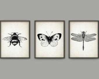 Insect Wall Art Poster Set Of 3 - Entomology Art Prints - Bumblebee Dragonfly Butterfly Home Decor - Entomology Art (B386)