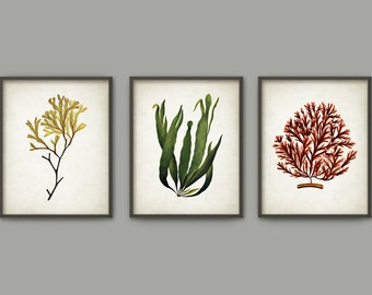 Seaweed Wall Art Poster Set Of 3 - Algae Art Prints - Marine Biology Home Decor - Seaweed Wall Art Poster (B388)