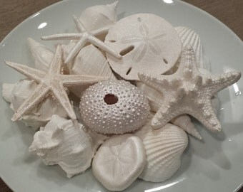 Beach Wedding Decor, Beach Decor, Starfish, Shells, Coastal Decor, Nautical Decor, Beach Wedding Favors, White Mother of Pearl Gift Bag