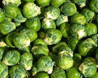 Brussel Sprouts- 100 seeds