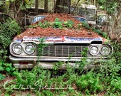 1964 White Chevy Impala with in the woods Photograph