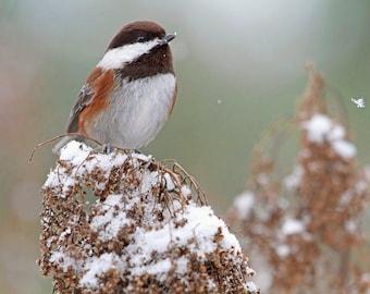 Small Birds, Winter Art, Chickadee Print, Bird Art, Nature Photography, Birds in Snow, Chickadee Art, Bird Wall Art, Chickadee Photograph