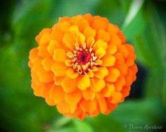 Sunrise Orange Flower
