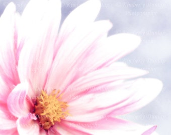 Soft Dahlia Photograph {White Pink Flower Picture Shabby Chic Feminine Floral Photography Summer Garden Spring Gray Grey Lavender Lilac}