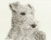 96 Wire Fox Terrier drawing print card