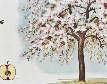 Vintage Poster - Botanical Poster - Vintage Czech - Czech Poster - Czech Decor - Apple Decor - Tree Decor - Botanical Decor  Botanical Print