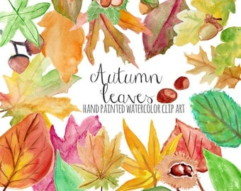 "Clipart: ""AUTUMN LEAVES""  hand painted watercolor fall leaves, 24 clipart 300 dpi PNG  files (5154)"