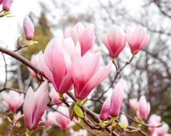 Magnolia Flower Print, Magnolia Photography, Magnolia Print, Magnolia Art, Fine Art Print