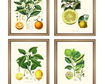 "Citrus Prints Set. Fruit Prints Set. Orange. Lemon. Lime. Grapefruit. Citrus Wall Art Set.   5x7"" 8x10"" 11x14"""