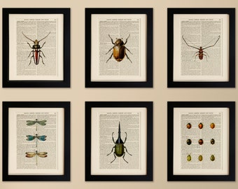 Set of 6 FRAMED Art Prints on old antique book page - Insect, Beetle, LadyBugs, Vintage Wall Art Print, Encyclopaedia Dictionary, Fab Gift!