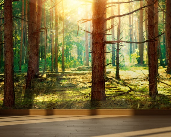 removable wallpaper murals forest - photo #24