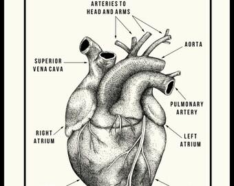 Anatomic Heart Poster