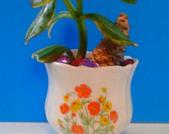 Beautiful Ceramic Flower Planter With Jade Plant.