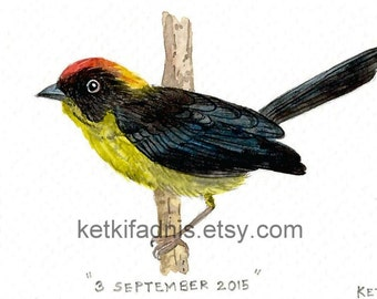 3  September 2015, Day 246 - Bolivian Brush Finch - Original ACEO watercolor painting