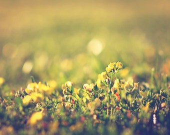 Yellow Flower - nature wall decor. landscape fine art print . field of flowers print. flower photography. dreamy countryside photography.