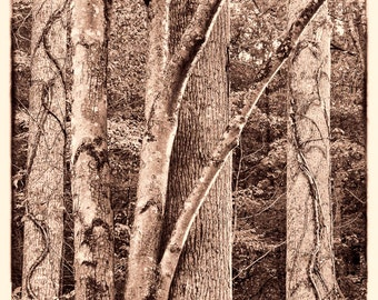 Fine Art Photography - Sepia Toned #5256