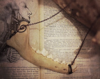 Coyote Jawbone Necklace, Bone Jewelry, Bone Necklace, Oddities, Curiosities, Oddities Necklace, Taxidermy Jewelry, Vulture Culture