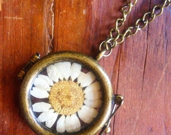 Real Dried Flower (Daisy) Locket Necklace