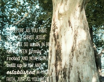 Christian wall art, Scripture verse Col. 2:6-7, tree photography, home decor