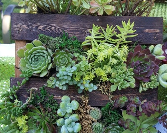 Succulent Pallets For All Occasions