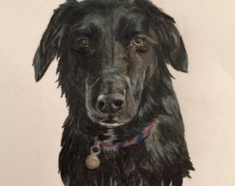 Black Dog - Colour Pencil Drawing