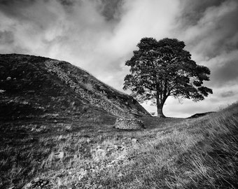 Fine Art Photograph, Black and White Landscape - Title: Sycamore Gap (Hadrian's Wall)