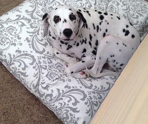 Designer Dog Bed Cover Pet Bed Duvet Covers Stuff By