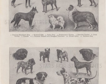 Vintage Dog Print Digital File, Antique Encyclopedia Page 8x11