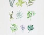 Herbs - Kitchen Art - Watercolor Illustration Print  - 11 x 14