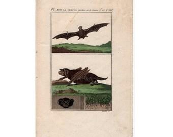 1775 ANTIQUE FLYING BAT print original antique bat engraving