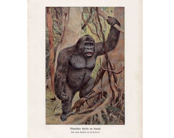 1900 GORILLA print original antique animal MONKEY lithograph