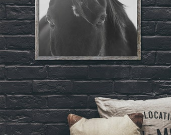 Close Up Black Horse Photograph, Black and White Animal Photography