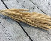 Dried Wheat Bundle for Corsages, Rustic Weddings, Fall Decor and More