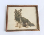 Sepia Dog Portrait Photograph in Wooden Frame