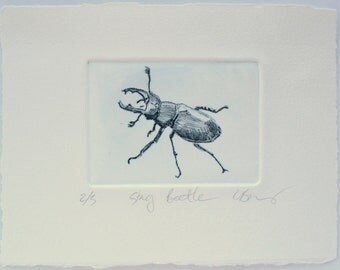 Stag Beetle drypoint, hand pulled print. Artist Proof.