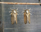 Cicada Earrings // Large raw brass cicada bugs on hypoallergenic 14k gold filled earwires for sensitive ears