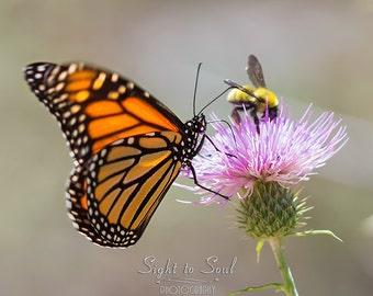 Nature Photography, bumble bee & monarch butterfly wall art, insect print, country home décor, fine art photography