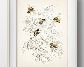 Honey Bees - IN-07 - Fine art print of a vintage natural history antique illustration 8x10 11x14 12x18 13x19