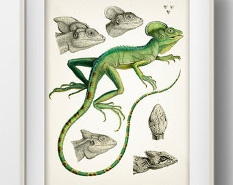 Green Chameleon Lizard - RE-01 - Fine art print of a vintage natural history antique illustration. 8x10 11x14 12x18 13x19