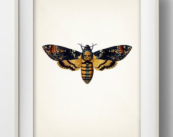 Death's Head Moth - Acherontia - MO-22 - Fine art print of a deathshead vintage natural history antique illustration