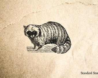 Antique Raccoon Rubber Stamp - 2 x 2 inches