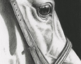 "Horse Charcoal Drawing 8""x10"" Giclee Print, Horse Art, Horse Eye, Tack Drawing, White Horse Sketch, Equine Art, Bridle, Charcoal Sketch"