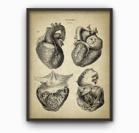 Heart Anatomy Art Poster 2 Vintage Heart Book Plate