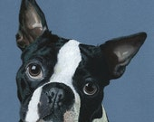 95 Boston Terrier card