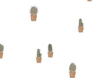 Postcard: Cacti!