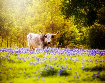 Texas Photography, Longhorn and Bluebonnets, Animal Photography, Livestock Photo, Longhorn Art, Gift Ideas for Texans, Travel, Wall Art