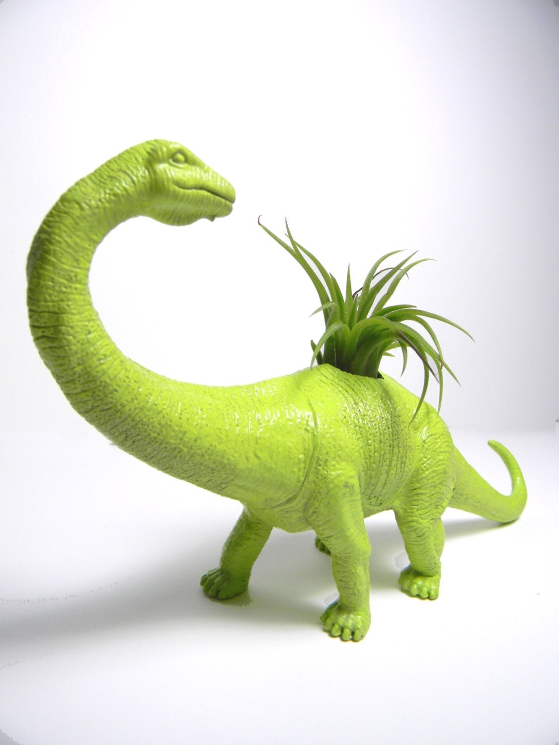 New Air Plant Dinosaur Planters With Air Plants Great For