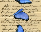 Butterfly art print - vintage butterfly illustration - wall decor - handlettering print